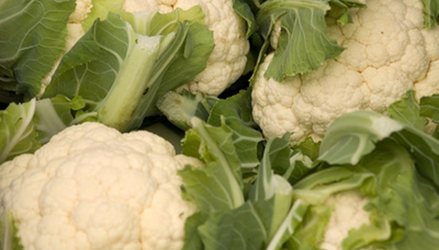 Numerous cauliflowers