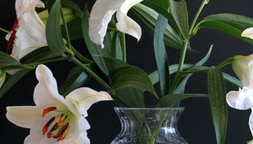 Species lilies bear fragrance more reliably than modern hybrid varieties.
