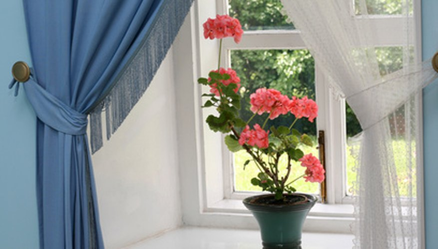 A bright, sunny window is a perfect spot for your geranium.