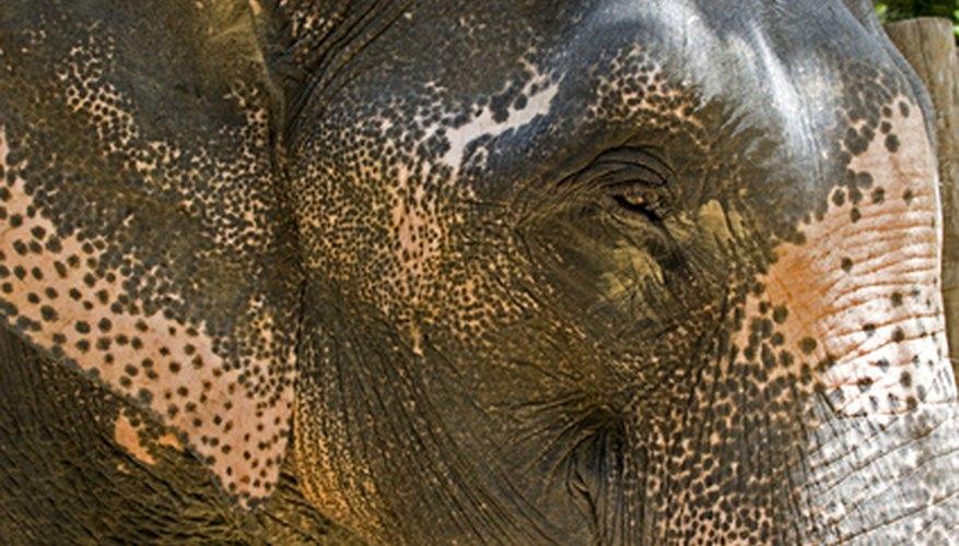 Deben tomarse acciones para proteger a los animales en peligro de extinción.