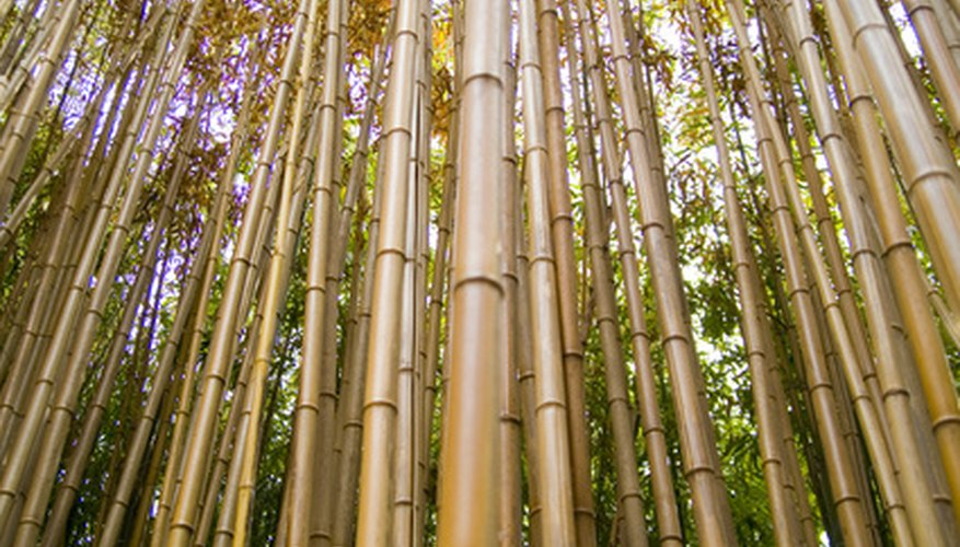 Bamboo is ideal for makeshift fences and privacy barriers.