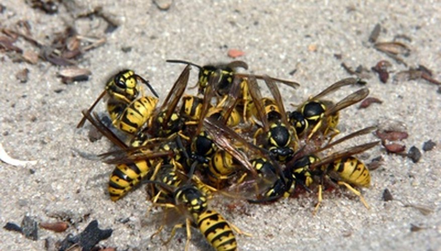 A group of wasps