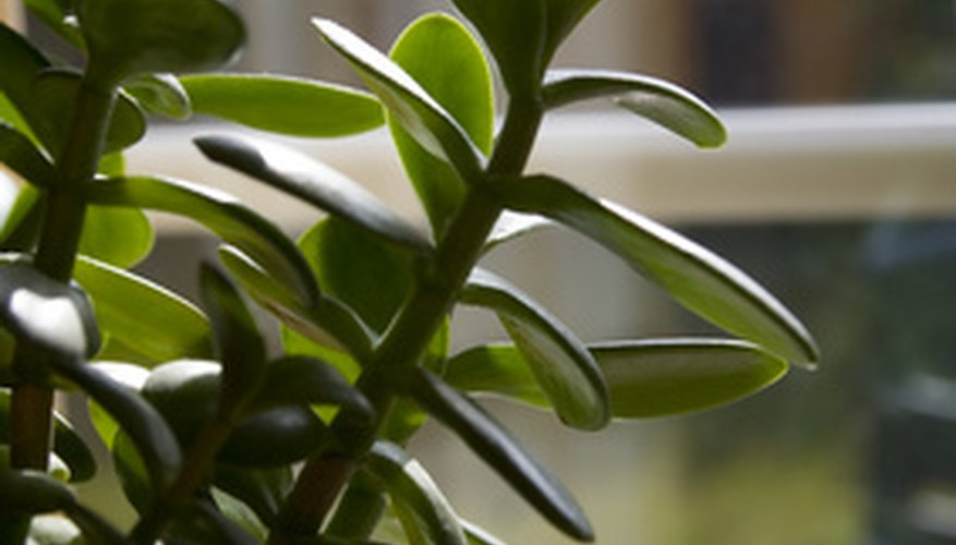Houseplants are well known for attracting a variety of insect and fungal infestations, including aphids, mold, flies and ants.
