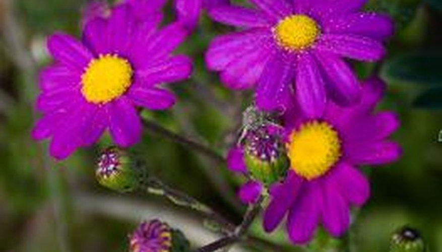 La mayoría de plantas que ves son angiospermas.