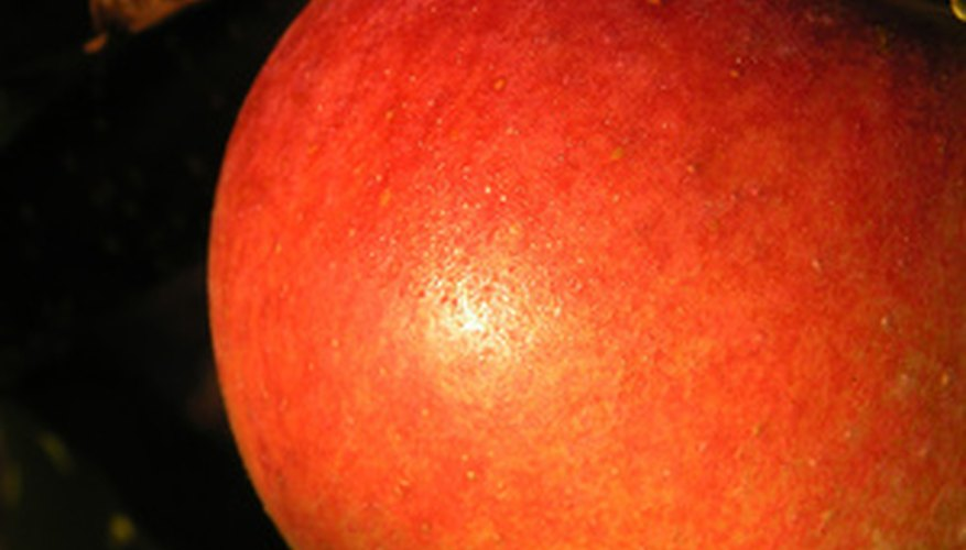 Apples come in a variety of sizes from ones cherry-sized to those nearly as big as a grapefruit.