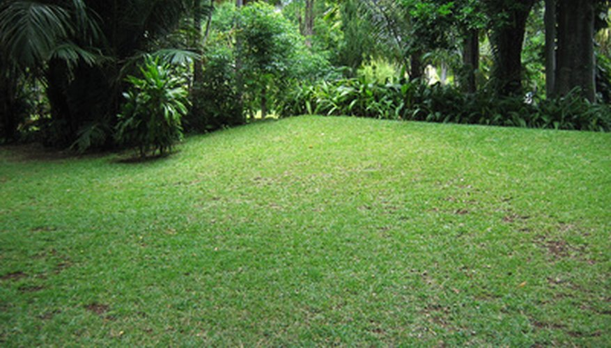 Lawn grass in a tropical climate