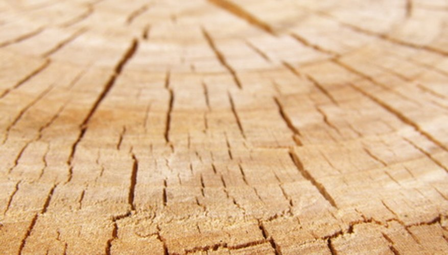 Dendrochronology is used to determine the age of trees.