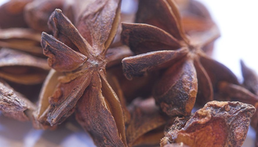 Don't confuse illicium with the herb anise, pimpinella.