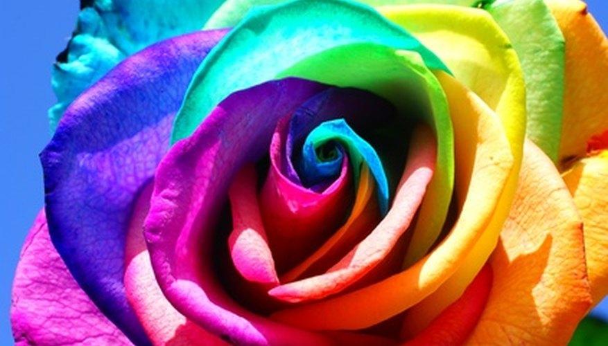 Las imágenes de rosas le dan vida a tu pintura.