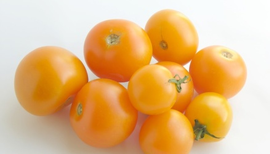 Sungold tomatoes ripen to a deep yellow-orange color at maturity.