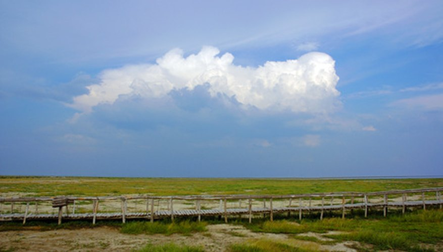 Grasslands are found in Asia, the Americas and Europe.