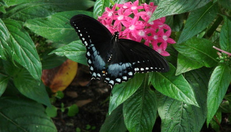 Create A Butterfly Garden Of Your Own.