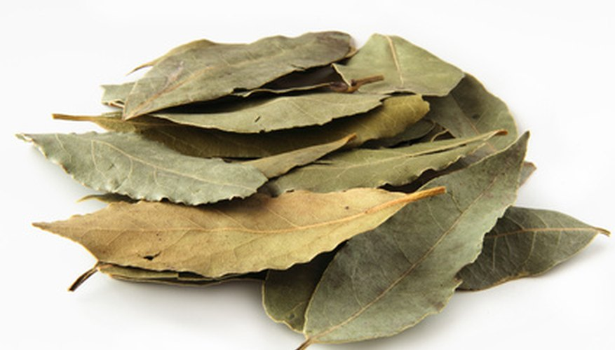 Bay leaves come from the bay laurel tree.