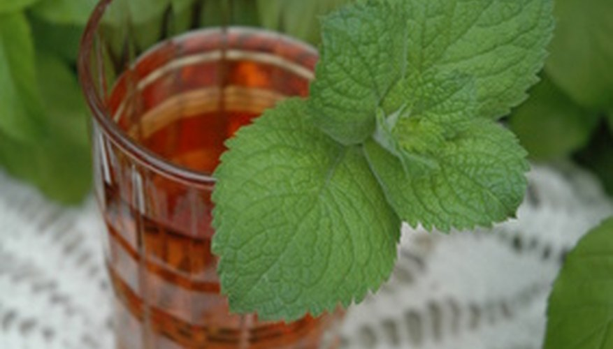 Mint, a rampant grower, is best controlled by being grown in a container.