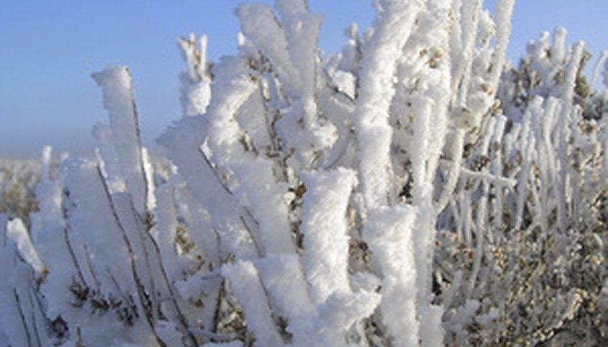 Cold Desert Biome