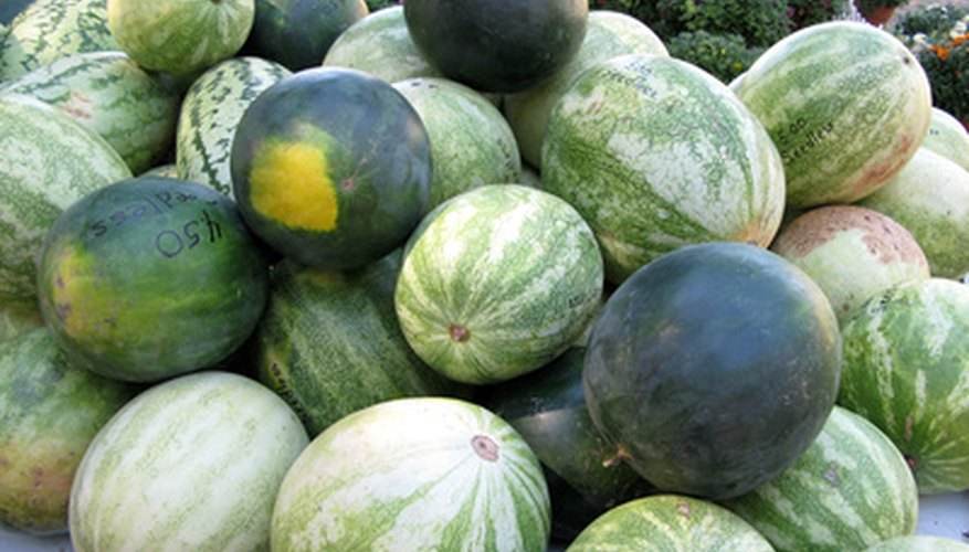 Trace the stages of your watermelon plants.