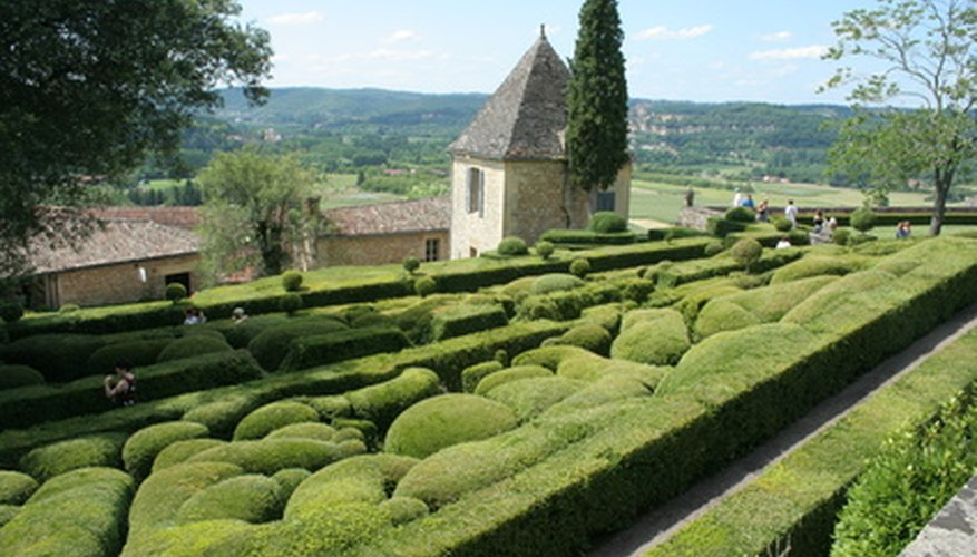 Boxwood is known for hedges and topiary but some varieties can be sculpted into interesting groundcovers.
