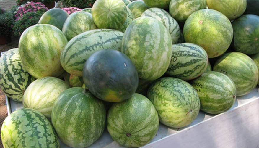 Try watermelon in your garden.