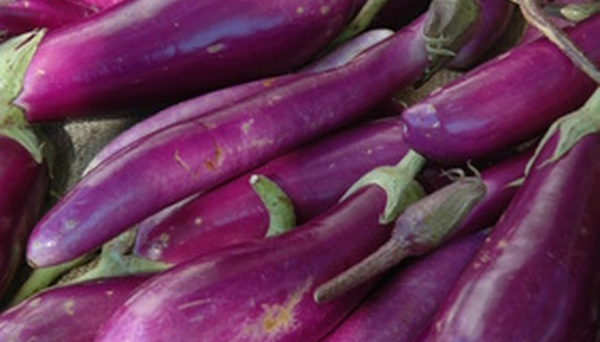 Growing eggplant indoors provides protection from outdoor pests.