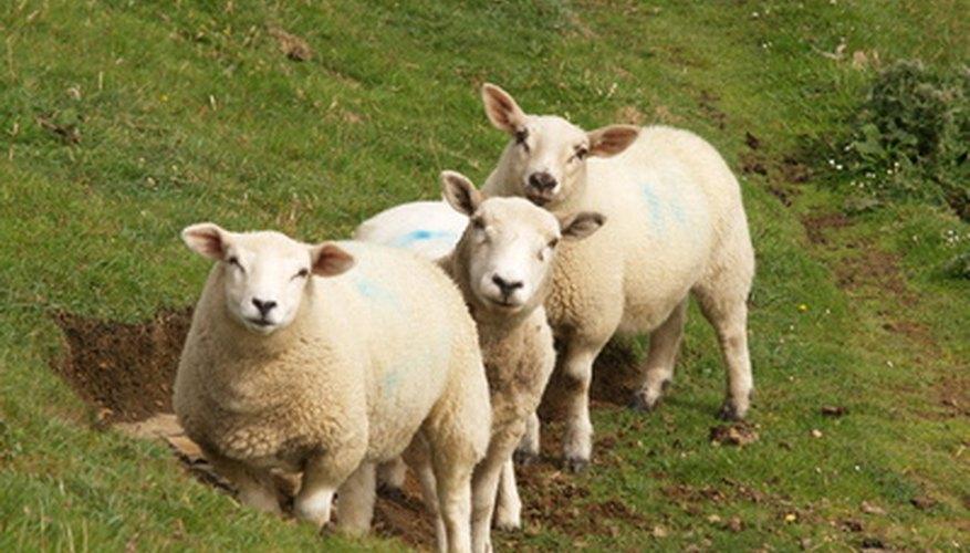 Captura la ternura de una oveja usando un molde para tu animal de peluche.