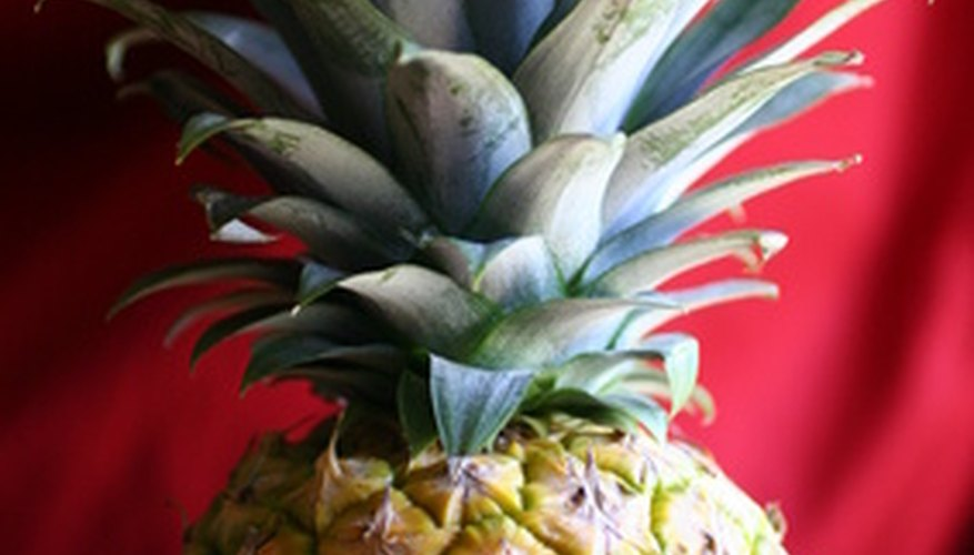 You can grow edible fruit from a pineapple bromeliad plant.