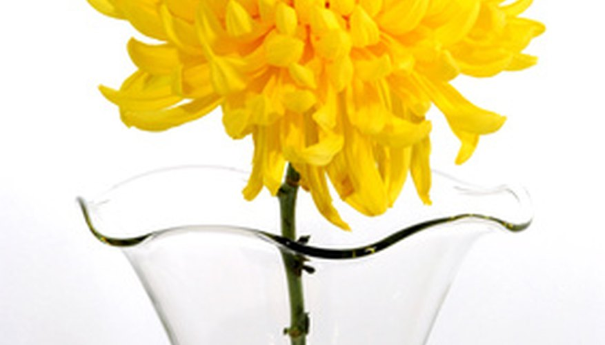 Decorative chrysanthemum