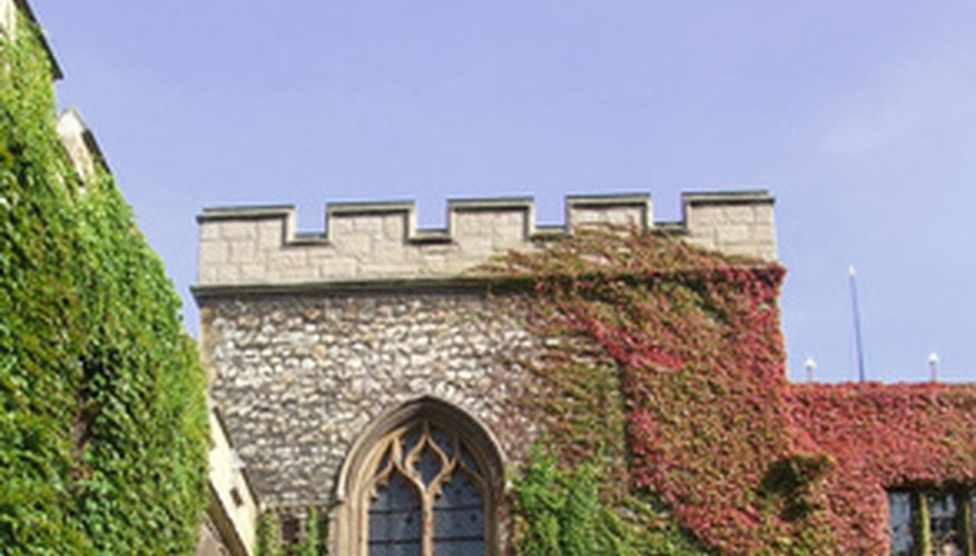 Boston ivy is frequently seen growing on masonry.