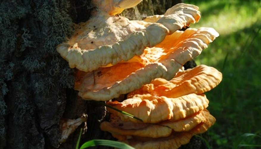 Tree fungus can be colorful and intriguing, but is still harmful to the tree.