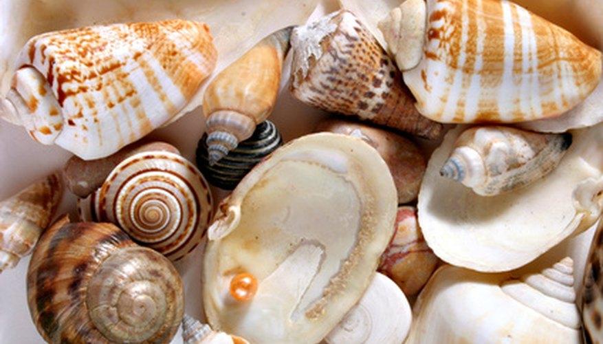 Las perlas naturales son increíblemente inusuales.