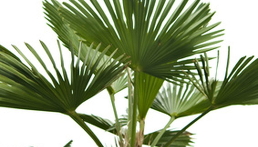 Repot a palm every one to two years.