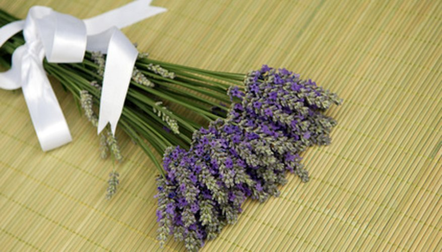 Lavender is used as perfume in women's clothing drawers.
