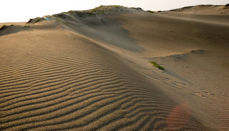 Various plants seek out the lowest levels along the sand dunes.
