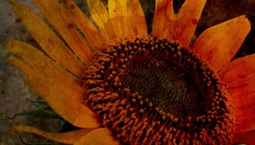 Dried sunflowers are suitable for fall centerpieces.