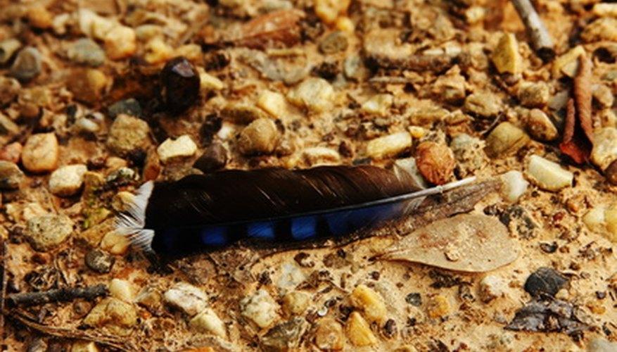 Una pluma puede incorporarse fácilmente en una búsqueda del tesoro.