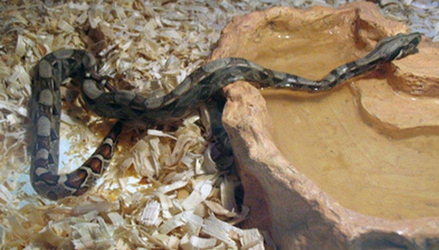 Algunos reptiles, como las serpientes, no tienen patas.