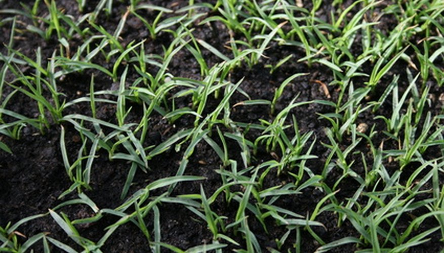 Cool season grasses start fastest in fall.