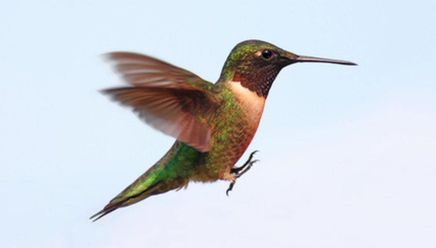 Jewel-like hummingbirds add charm to any garden.
