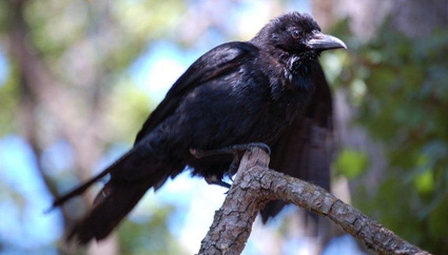 Un disfraz de cuervo es divertido para celebraciones de Halloween y actuaciones.