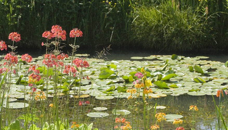 Many plants tolerate water, from water lilies to yellow flags.