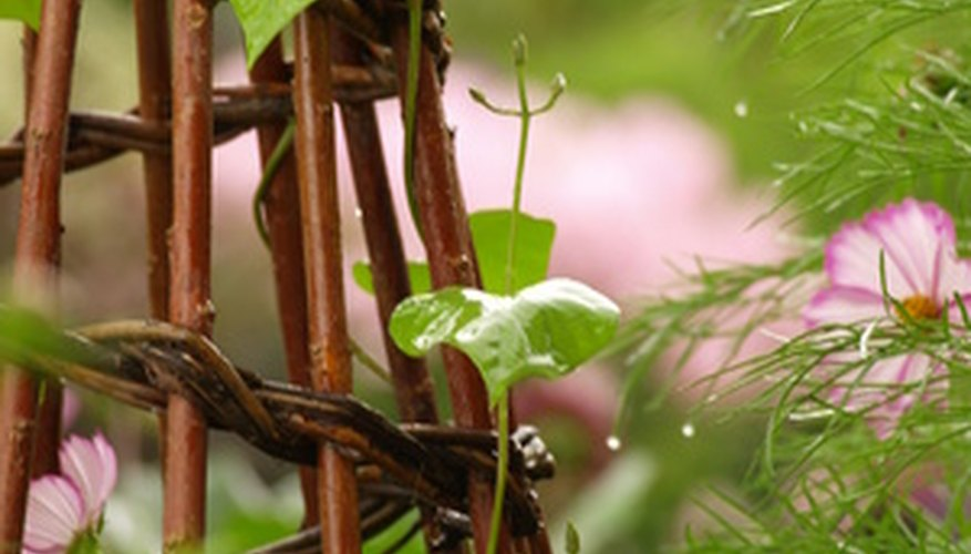 A trellis supports the upward growth of plants.