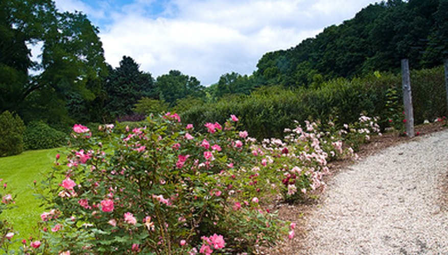 Pairing shrubs and flowers adds interest and texture to the landscape.