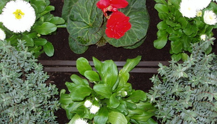 Window herbs can be attractive and useful.