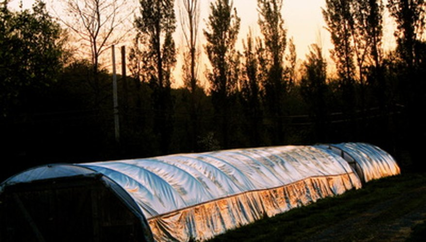 Hoop-shaped greenhouses with insulating covers at sunset.