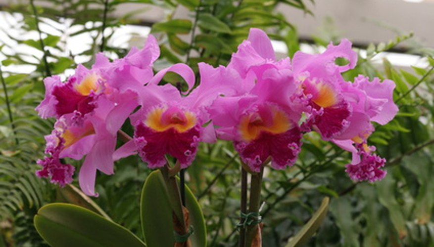 Orchids can bring vibrant colors to your home.