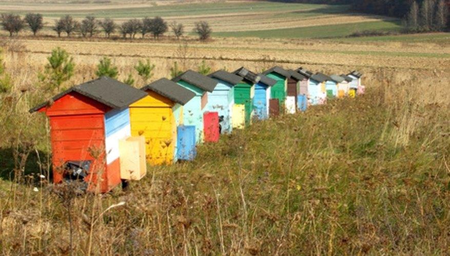 Cómo cuidar las abejas durante el primer año.