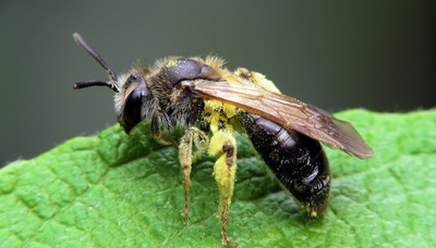 Bees and some wasps are beneficial in the garden