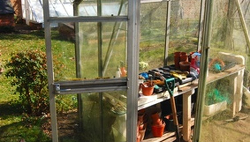 Grow vegetables from seeds in a backyard greenhouse.