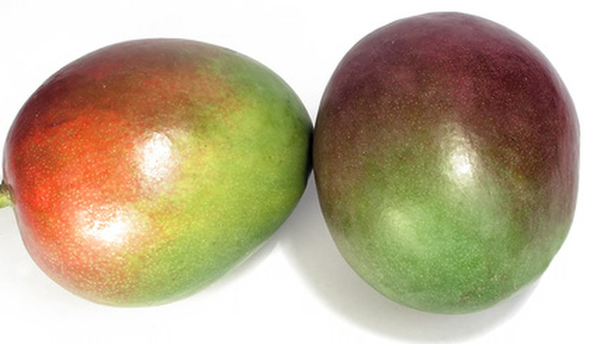 Mango trees are one of many fruit tree species that will prosper in Baguio City.