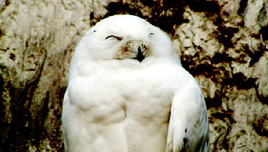 Owls produce pellets about 20 hours after they eat.