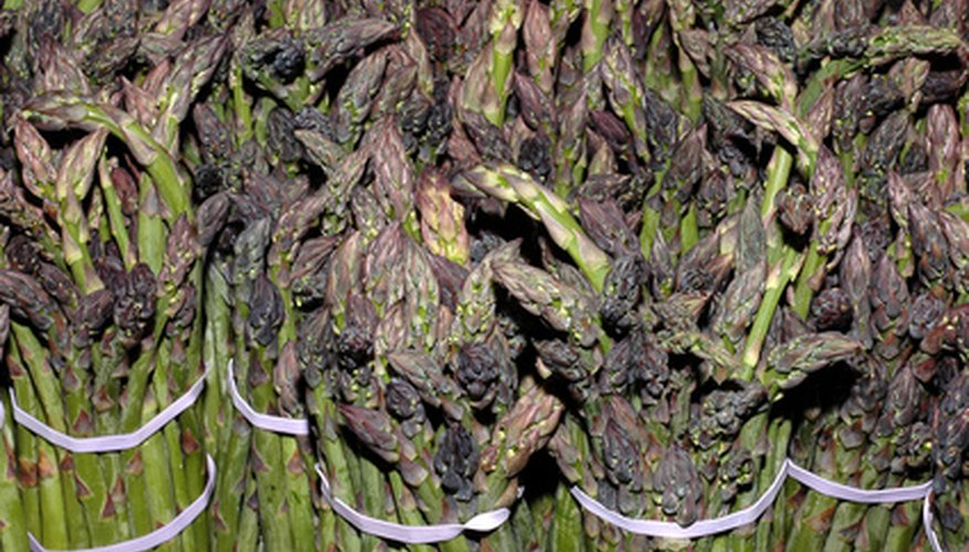 Bunches of asparagus spears